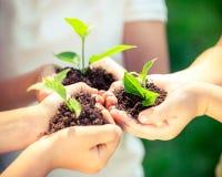 brown räknad dagjord som miljölövverk går den gående gröna treen för text för slogan för ordstäv för kramnaturuttryck Royaltyfri Fotografi