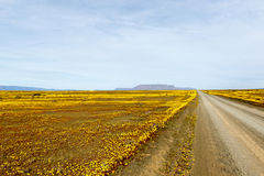Brown road with yellow fields in the flat landscape that is Tank Royalty Free Stock Images