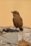 A brown rock chat Stock Photo