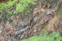 Brown rock with moss and clover Royalty Free Stock Photo