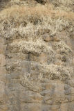 Brown rock texture. Stone background Royalty Free Stock Photos