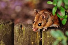 Brown Rodent on Gray Fence Beside Green Leaved Plants Under Sunny Sky Royalty Free Stock Images