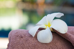Brown roll towel with plumeria on beach chair Stock Photography