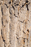 Brown rough tree bark texture Stock Photography