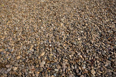 Brown round gravel or small stone. Stock Image