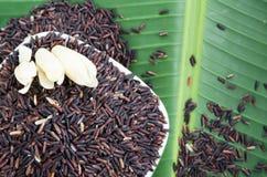 Brown ryż od Tajlandia na białym pucharu i banana liścia dowcipie Zdjęcie Royalty Free