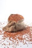 Brown ryż Zdjęcia Royalty Free