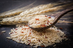 Brown ryż Zdjęcie Royalty Free