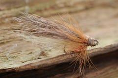 Brown ryba komarnica Obrazy Stock