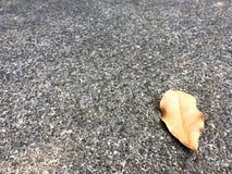 Brown a s?ch? la baisse de feuille sur le plancher en pierre grenu Fond ext?rieur classique de texture image libre de droits