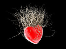 Brown's roots grew out of a red heart, in a black background. Stock Photography