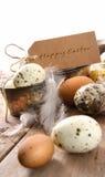 Brown salpicou ovos com cartão de easter Imagens de Stock Royalty Free