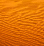 the brown sand dune      in the sahara morocco desert Royalty Free Stock Photography