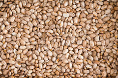 Brown sano Pinto Beans per il fondo della carta da parati Immagine Stock