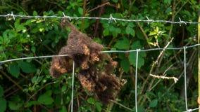 Brown-Schafwolle, die an einem Zaun hängt Stockfotografie