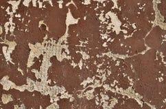 Brown-Schalenfarbe Lizenzfreie Stockfotos