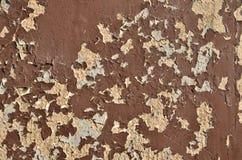 Brown-Schalenfarbe Stockfotos