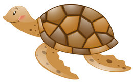 Brown-Schildkröte auf weißem Hintergrund Lizenzfreies Stockfoto