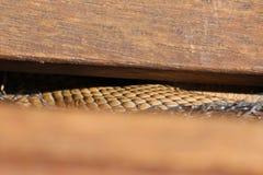 Brown-Schlange stuft auf Schritt ein stockfotos