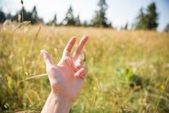Brown-Schmetterling auf Frauen-Hand auf Sunny Summer Day mit Feldern stockbilder