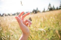 Brown-Schmetterling auf Frauen-Hand auf Sunny Summer Day mit Feldern stockbild