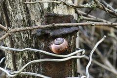 Brown-Schnecke, die oben an Rusty Metal Pipe Which Tied mit altem Grey Wood Board mit Aluminiumdraht hängt Lizenzfreies Stockbild