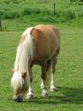 Brown-schweres Pferd Lizenzfreies Stockfoto