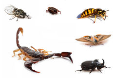 Brown scorpion and insects Royalty Free Stock Images