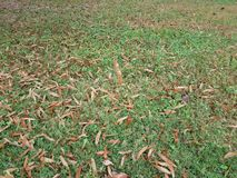 Brown se va en hierba verde y una hoja marrón flotante foto de archivo libre de regalías