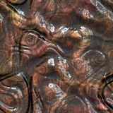 Brown Seamless monster skin Texture Stock Images