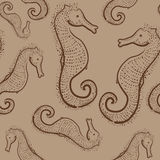 Brown seamless pattern with hand drawn seahorses Royalty Free Stock Image