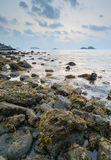 Brown seaweed algae on rock in sunset Stock Photo