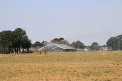 Brown secó los campos causados por la sequedad del verano de 2018 en los Países Bajos imagen de archivo libre de regalías