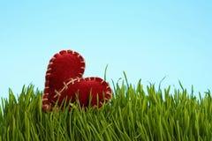 Brown a senti la chaleur dans l'herbe verte au-dessus du ciel bleu Photographie stock