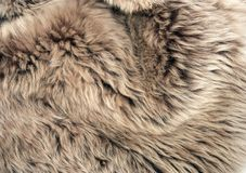 Brown sheepskin Stock Images