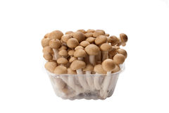 Brown shimeji mushroom Stock Photos