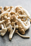 Brown shimeji mushrooms Stock Photos