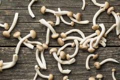 Brown shimeji mushrooms Stock Images