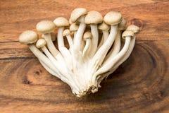 Brown shimeji mushrooms Stock Photo