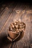 Brown-shimeji Pilze stockfotografie