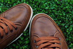 Brown shoes Stock Photos