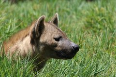 Brown Short-coated Dog on Green Grass Field Stock Photography