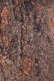 Brown skórka Zdjęcie Stock