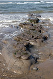 Brown slimey mud rocks. Mud banks on the west coast of ireland near ballybunion Royalty Free Stock Photography