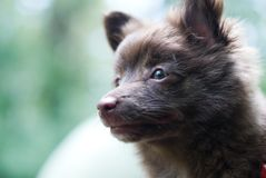 Brown small dog Stock Photos