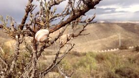 Brown Snail on Brown Bare Tree Royalty Free Stock Photos