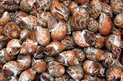 Brown snails. A background of brown snails Royalty Free Stock Photo