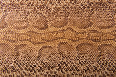 Brown snake pattern imitation, background Stock Images