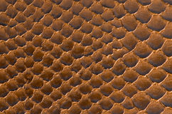 Brown snake skin background Stock Images