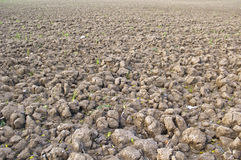 Brown soil of cultivated field Stock Photography